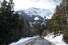 Banff, AB 2011