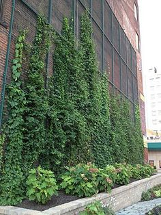 Green Wall at Ft. Duquesne Boulevard and 7th Avenue, Downtown Pittsburgh, Summer 2013