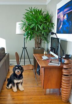 this article is actually about design, but i can't stop looking at the dog!