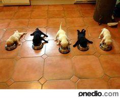 Sempatiklik Patlaması: 24 Aşırı Sevimli Köpek Yavrusu! - onedio.com