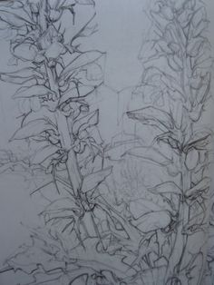Student Drawing - plant study in sketchbook