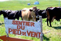 Îles de la Madeleine: précieux guide gourmand