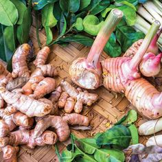 Grow Your Own Turmeric and Ginger