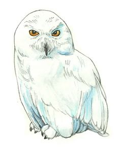 How to Draw Hedwig from Harry Potter -- via wikiHow.com