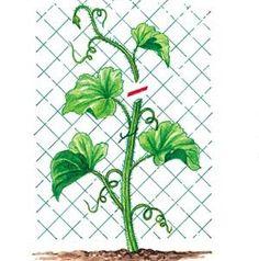 J. Bordier - l'ABC du potager - Rustica éditions Plantation, Balcony Garden, Growing Plants, Botany, Horticulture, Beautiful Gardens, Plant Leaves, Planters, Lily