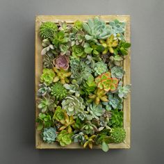 Succulent Living Picture Frame DIY Kit by Juicykits.com