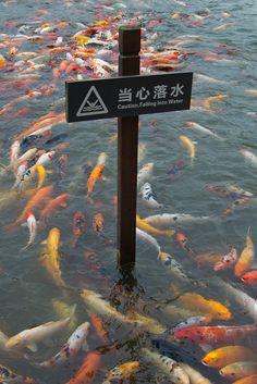 Caution, Falling Into Water | Photo: © 2001 Jenpiccalo @ Flickr. http://www.flickr.com/photos/jenpiccalo/6252838603