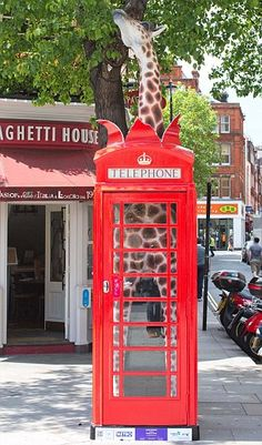 Across Londonís streets youíll find replicas of the famous Gilbert Scott red telephone box, transformed by different artists.