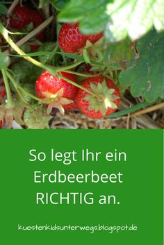 Unterwegs im Garten: Erdbeerbeet anlegen. Auf Küstenkidsunterwegs zeige ich Euc… Out and about in the garden: create a strawberry bed. On the Coast Kids Trail, I'll show you how to put on a strawberry bed and put your strawberry plants in the bed. Strawberry Beds, Strawberry Garden, Strawberry Plants, Avocado Dessert, Backyard Plants, Backyard Garden Design, Garden Kids, Starting A Garden, Avocado Toast