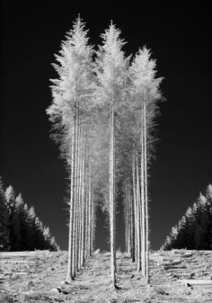 ♂ Black and white photography nature trees