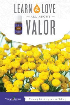 There's a reason Valor is so popular! It's aroma is like no other. Learn more here!