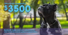 Have you been having your #walk4animals? This month's ResQpool is $3,500! http://www.resqwalk.com