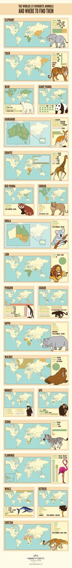 The Worlds 21 Favourite Animals & Where To Find Them - Elephant, Tiger, Polar Bear, American Black Bear, Giant Panda, Kangaroo, Red Panda, Cougar, Koala, Lion, Penguin, Jaguar, Hippo, Walrus, Monkey, Ape, Zebra, Flamingo, Whale, Ostrich & Cheetah