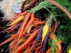 Have you ever seen multi-colored carrots before? Autumn Market Colors @PennySadler 2014