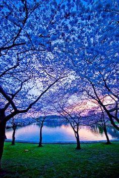 Blue Dusk, Charlottesville, Virginia...