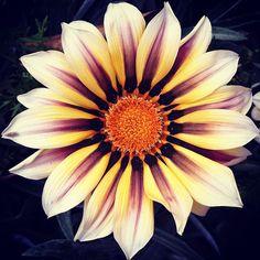such a pretty flower!