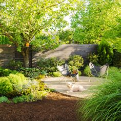 Envelop spaces - Backyard Ideas for Dogs  - Sunset