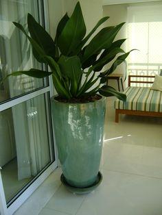 Mejores plantas de interior