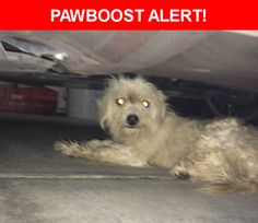 Is this your lost pet? Found in Tolleson, AZ 85353. Please spread the word so we can find the owner!  White dog. Possibly a Maltese or a mix. Dirty and matted. Currently with foster.  Near 91st Ave & Whyman