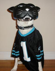 super popular 13c92 eecb8 cam newton dog jersey