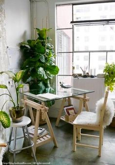 Using large plants as pieces of design | URBAN JUNGLE (via Bloglovin.com )
