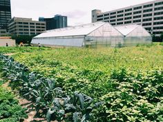 According to the Michigan Department of Agriculture & Rural Development, there are about 10 million acres of farmland in Michigan and the state is home to 52,194 farms. As Detroit's landscape has changed with depopulation, urban agriculture has sprung up in lots and fields across the city. Besides simplygrowing food, these are places to learn,
