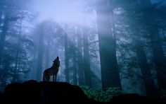 Image detail for -Wolf in the Woods desktop wallpaper