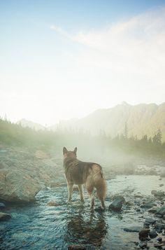 Aldo in Cascadia.