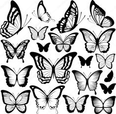 butterfly tattoo: butterflies black silhouettes isolated on white background Illustration Black Butterfly Tattoo, Butterfly Outline, Butterfly Stencil, Butterfly Clip Art, Butterfly Images, Butterfly Drawing, Butterfly Tattoo Designs, White Butterfly, Butterfly Wings