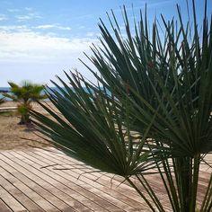 #Paseo junto a la #Torre San Vicente. #Dunas #vegetacion #playa #palmeras #palmas #mar #sol #paraiso #BenicassimParaiso #benicassim #paradise #sun #happymonday #instagood