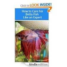 1000 images about how to take care of a betta fish on for How to take care of beta fish