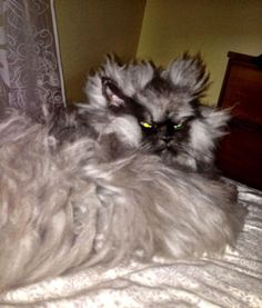 Seattle cat 'Colonel Meow' is latest Facebook superstar