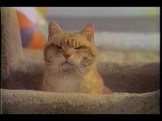 Morris The Cat Was The Original Grumpy Cat