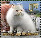 White Persian (Felis silvestris catus)