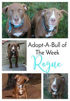 Adopt-A-Bull Rogue i