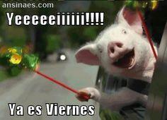 Yeeeeeiii!! Ya es viernes