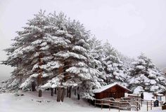 Alpine Retreat