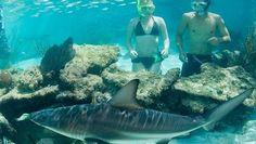 Πως να μείωσουμε τον κινδύνο συνάντησης με έναν καρχαρία.