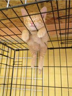 Cute kitten : Too cute animals