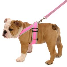 10 best Pink Dog Accessories   Girl Dogs, Pink, Girly Coat ...