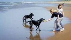 Tipps zum Urlaub mit Tieren
