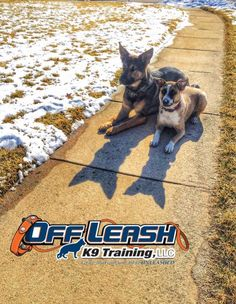 Puppy obedience training dc