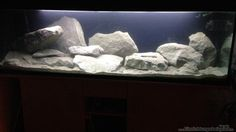 Aquarium Hauptansicht von heartbeat of Malawi the second