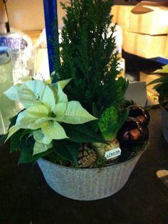 Sammenplanting Planters, Plant, Window Boxes, Pot Holders, Flower Planters, Pots