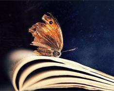 Butterfly Fine Art Photography Conceptual Still by AylilAntoniu