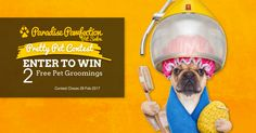 Paradise Pawfection Pretty Pet Contest. WIN 2 Free Pet Groomings. Signup and share. The more points you get the better chance of winning. What could easier than that!