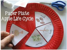 Apple Life Cycle Paper Plate Craft DOWNLOAD template via Clever Classroom >> http://cleverclassroomblog.blogspot.com.au/2014/09/apple-bottle-cap-prints-resources-and.html Fall is apple season and what better way to learn about the life cycle of an apple but through craft.