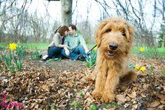 london-ontario-pet-photography-blue02.jpg 900×599 pixels