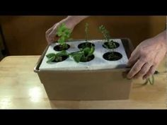 How to Start Seeds for Hydroponic Systems | HubPages