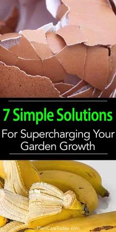 7 Simple Solutions For Supercharging Your Garden Growth is part of Garden growth - Do you want a rich, vibrant garden Discover how fish bones and eggshells invigorate your marigolds Put those messy banana peels and epsom salt to work Organic Vegetables, Growing Vegetables, Growing Plants, Organic Fruit, Planting Vegetables, Veggies, Container Gardening Vegetables, Growing Tomatoes, Growing Spinach